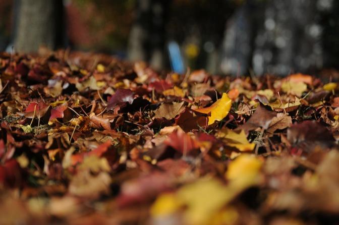 autumn-101329_1280